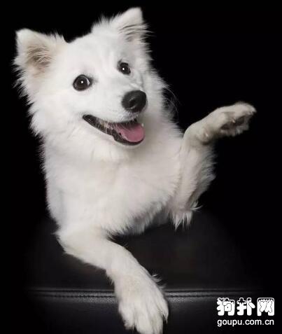 狗狗打招呼的方式让你觉得不舒服了吗?